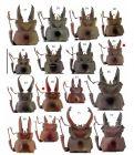 【物说新种-3】锹甲虫两个新种