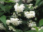 青岛植物园:不知名的花