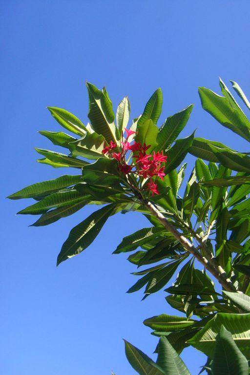 仰望天空,看蓝天白云绿树红花