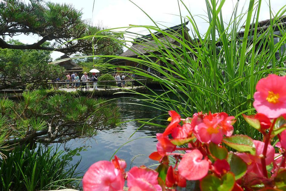 忍野八海之美 我们在富士山五合目没有看到富士山山顶,只好驱车下山,来到富士山脚下不远处的一个农村,这个地方叫山梨县忍野村,要在这里参观一个新的景点。下车后,我们通过一条小路,看到了路两旁美观的农舍,白色的墙,咖啡色的屋顶,正面都装了整排的玻璃窗,院子里种了各色花木,红的红,绿的绿,牵牛花以它的生命力顽强地爬上了房檐,建筑风格干净简洁,显示出浓郁的农村景象。拐了一个弯,是忍野村的一条小商业街。这里出产桃。盛夏时节,鲜桃熟了,街道两边的商店,都卖新鲜喜人的桃。那里出卖的鲜桃,按个计价,大的500日元一个,相当