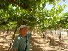 援非印象-埃及的葡萄园