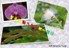 【图片】一组花团锦簇、一抹盛夏热情