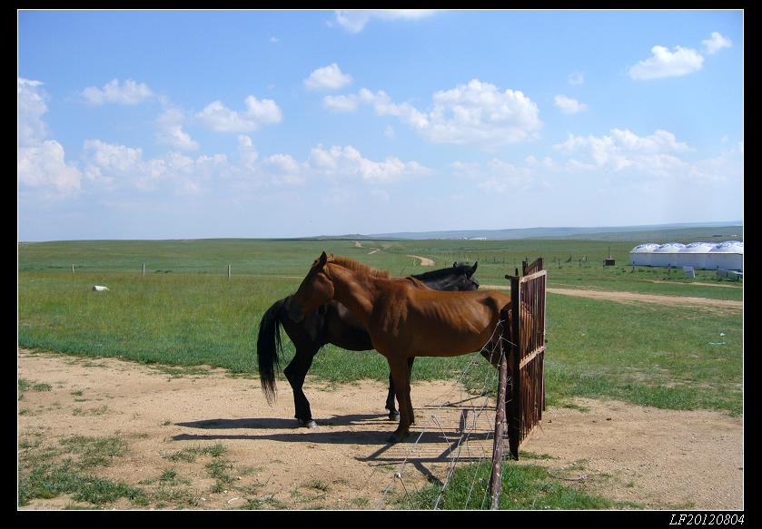 望见两匹骏马似乎被人拴在一起