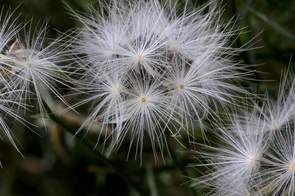 野外人观生命 - 探矿者           - Prospector blog