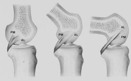科学网—膝关节韧带损伤:解剖