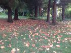 秋叶 秋水 长天 排云