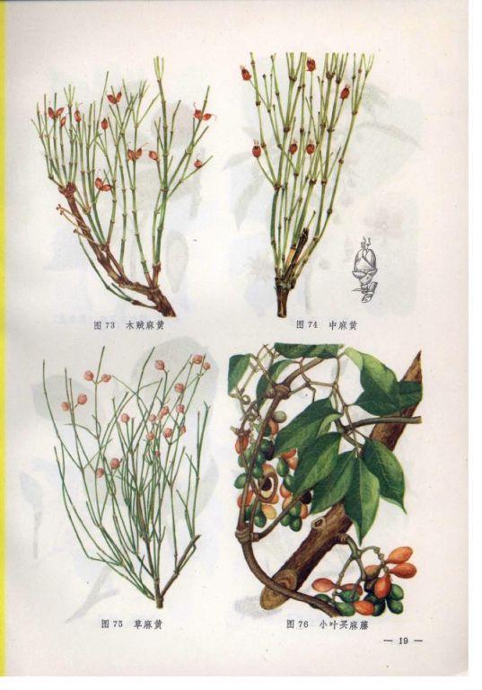 【药材产地】草麻黄主产于河北省