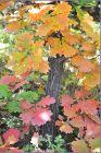 秋天的色彩——坡峰岭之二