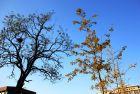 初冬的鸟窝与房子:2012傻拍(14)