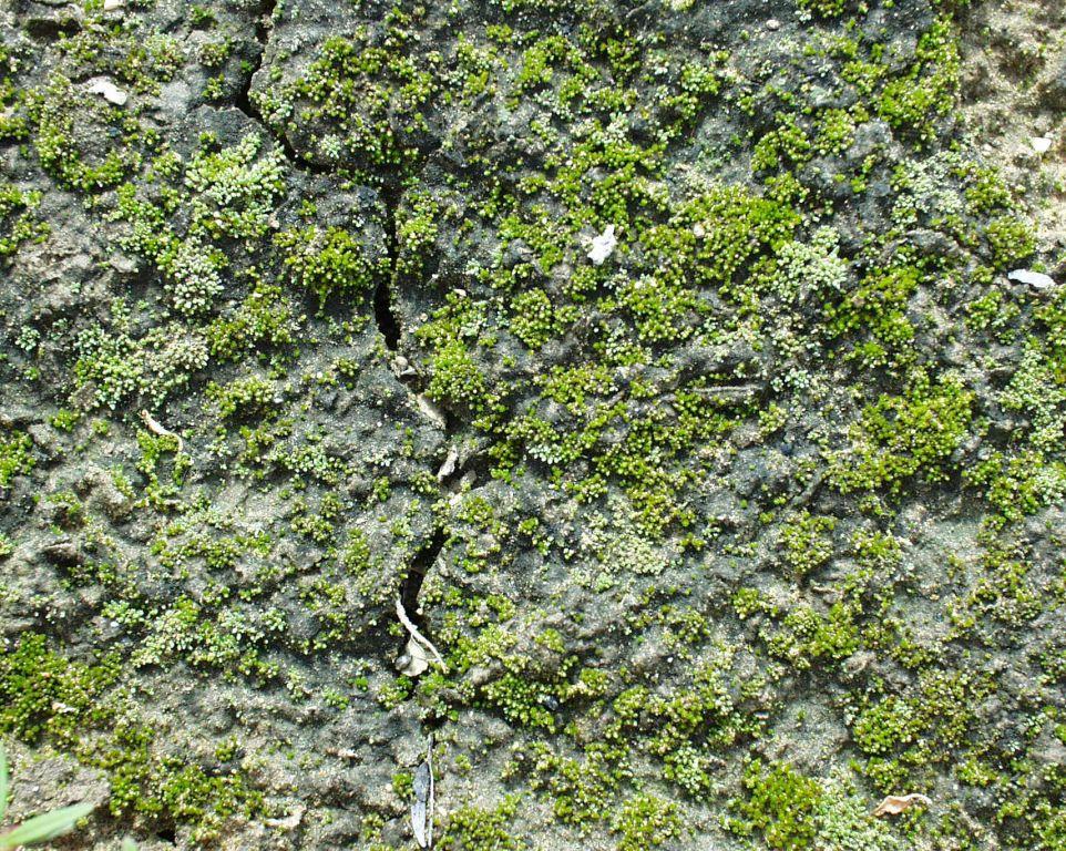 荒漠中的生物结皮 - 梁子 - 面朝大海 春暖花开