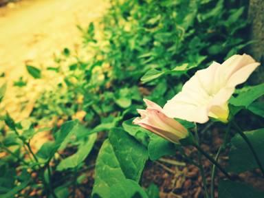 倾听研究生讲述自然的声音——阳台小记 - 蒋高明 - 蒋高明的博客