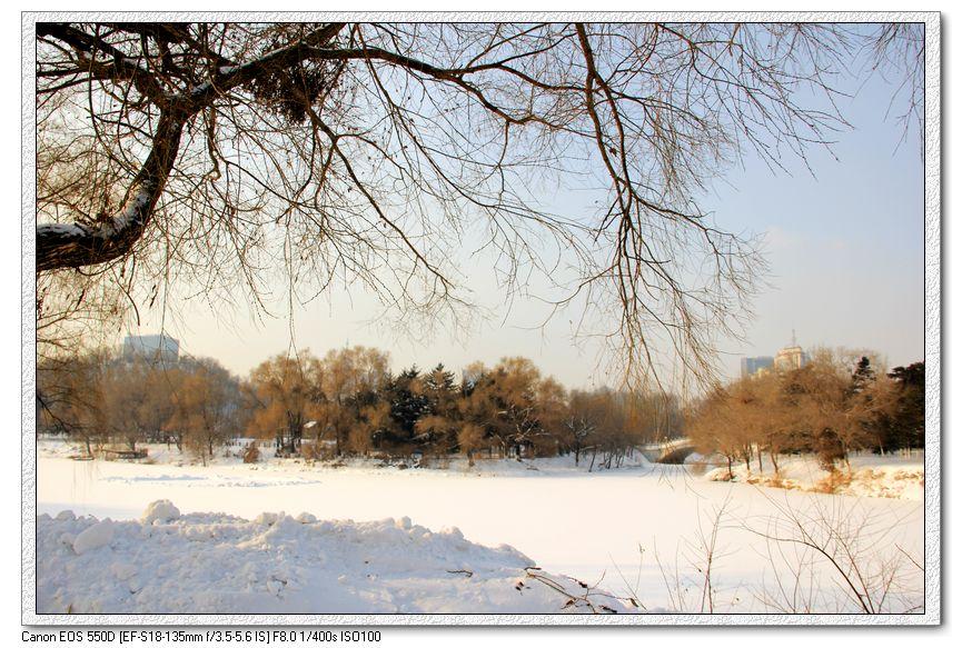 森林意境雪景图片
