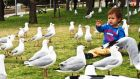 海鸥和孩子们