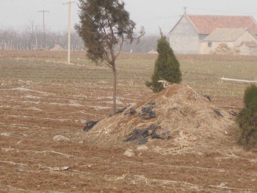 中国发展绕不开的问题:农村丧葬制度落实 - 追梦人 - 博客小蜘蛛