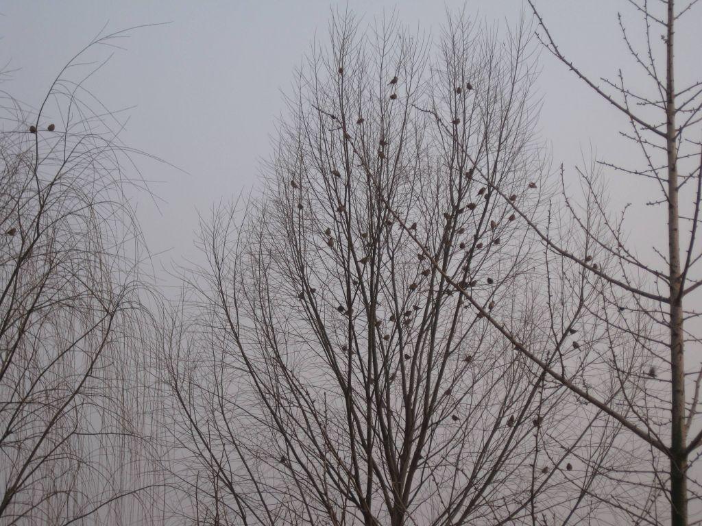 生态农场的麻雀们 - 蒋高明 - 蒋高明的博客