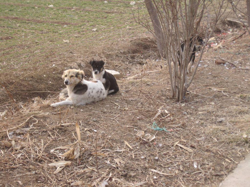 那些可爱的小动物们没有受到农药除草剂的污染