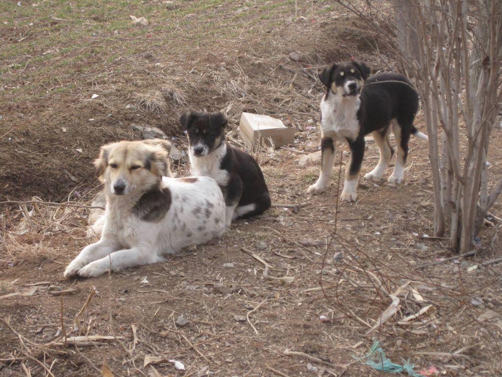 那些可爱的小动物们没有受到农药除草剂的污染,但只因好奇外面的世界