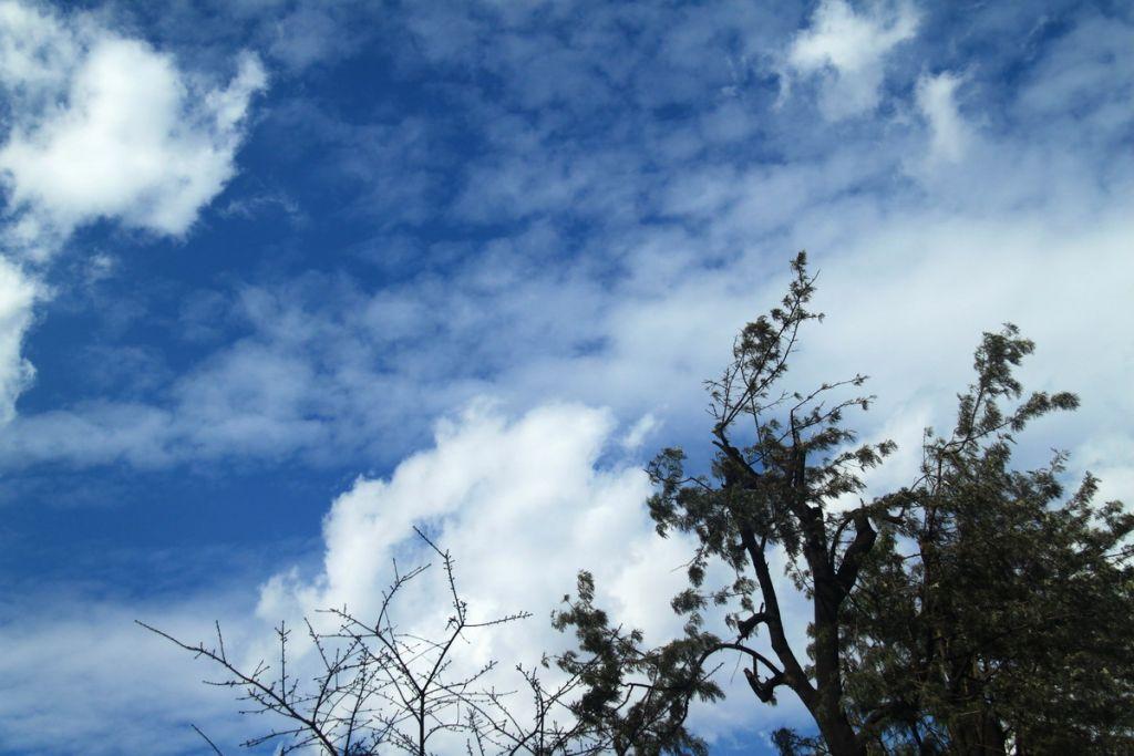 8 这几天,从电视新闻中不断听到云南持续干旱成灾的报导,可见同样自然状态,从不同视角的感受是很不相同的,我们从阴雨绵绵的长沙到云南,感到兰天白云,天高气爽,但云南人则更盼白云转乌云快下点雨救旱,据说,我们这天看到的云都是少见的,很长时间,昆明都是晴空万里,一点云都没有!还是希望云南快下点雨吧! 有关链接 * 昆明的兰天白云 云南探亲旅游之一