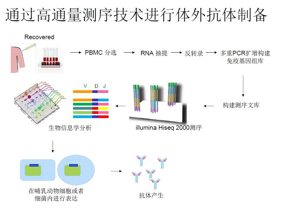 测序的方法可以快速大量制备h7n9单克隆抗体的技术