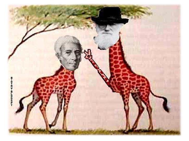 科学网—长颈鹿的故事和表观遗传学的文章(ppt)