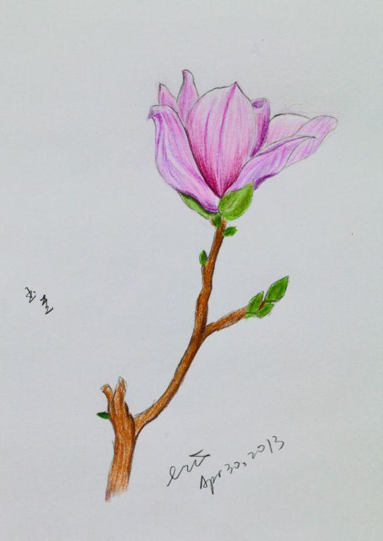 美丽的康乃馨绘画步骤的图片