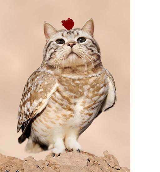 动物 猫 猫咪 鸟类