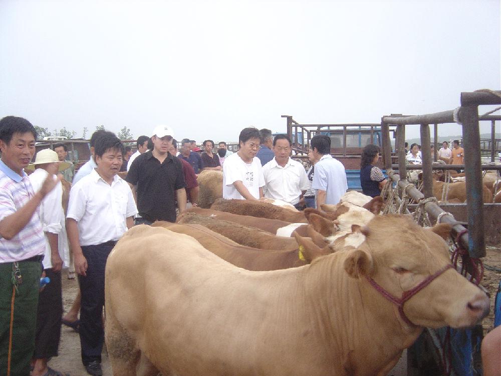 《生态农场纪实》连载之十三:带农民去买牛 - 蒋高明 - 蒋高明的博客