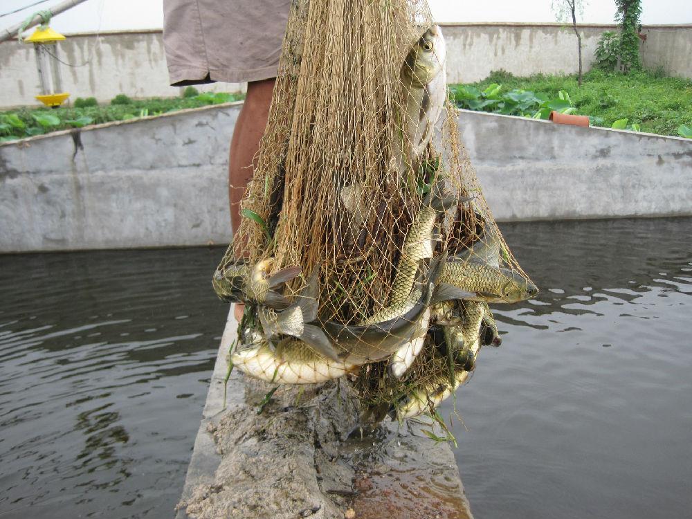 《生态农场纪实》连载之十六:青储池养鱼 - 蒋高明 - 蒋高明的博客