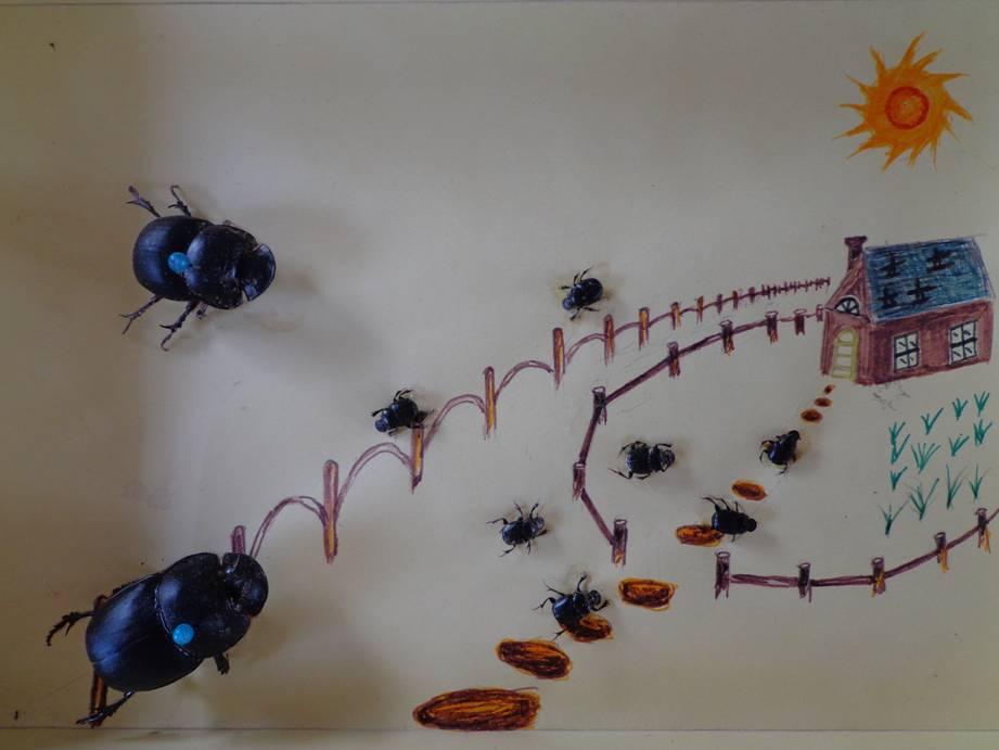 《生态农场纪实》连载之二十四:研究生们制作的昆虫标本 - 蒋高明 - 蒋高明的博客