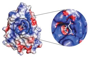 科学网—叶酸与其相连的受体的结构被解析