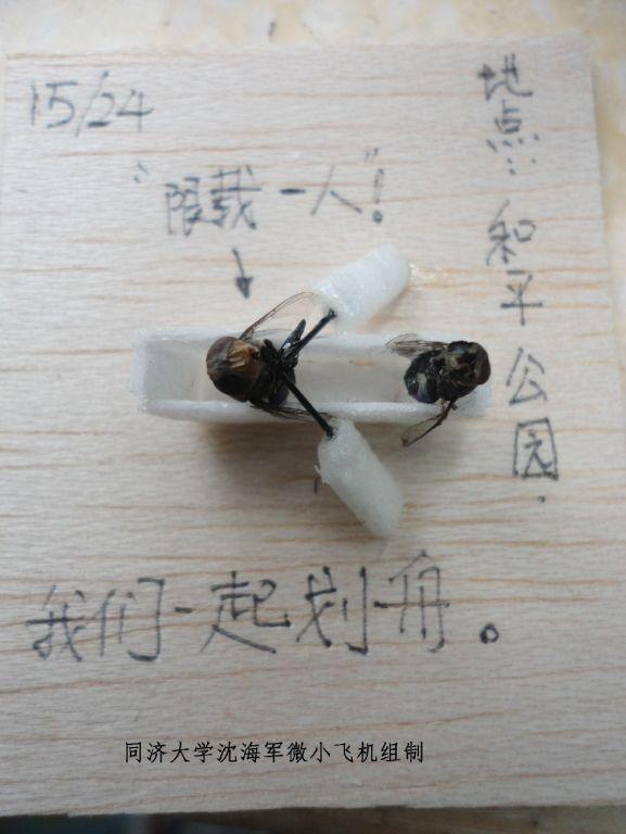 苍蝇飞机凤凰男的一生(连环画)