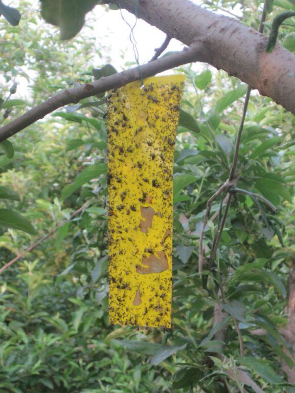 《生态农场纪实》连载之五十一:小壁蜂显神威 - 蒋高明 - 蒋高明的博客