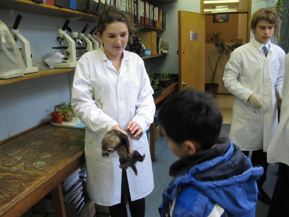动物实验室里各种小动物被学生们当宠