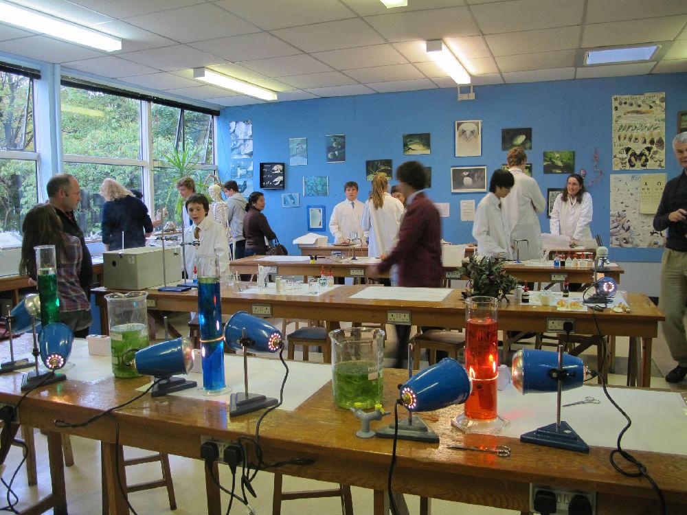 动物实验室里各种小动物被学生们当