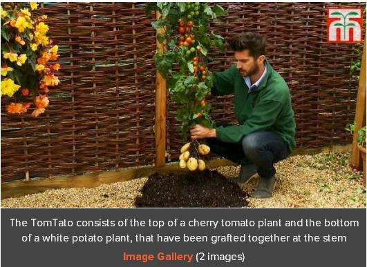 汤普森 摩根/这种植物是由英国的一家园艺公司即汤普森/摩根(Thompson...