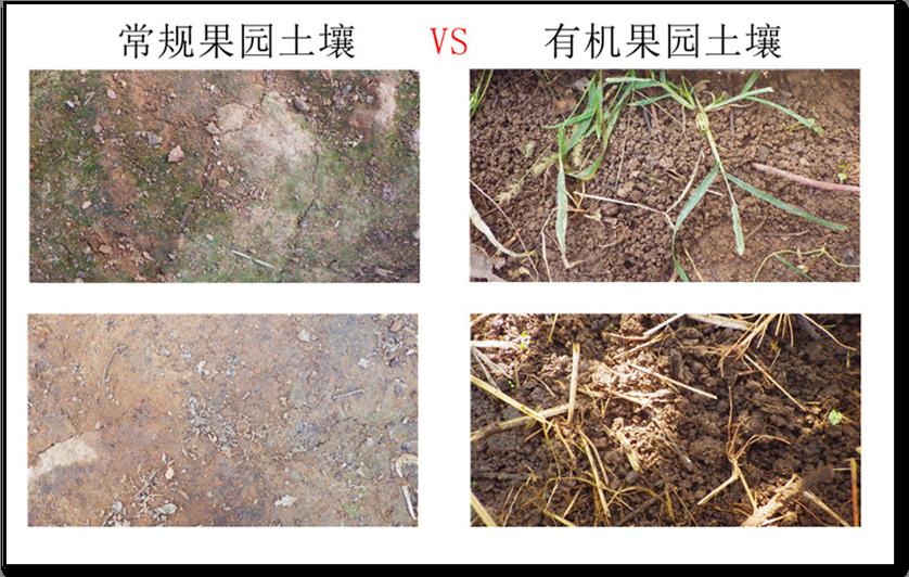 蚯蚓喜欢在有机果园安家 - 蒋高明 - 蒋高明的博客
