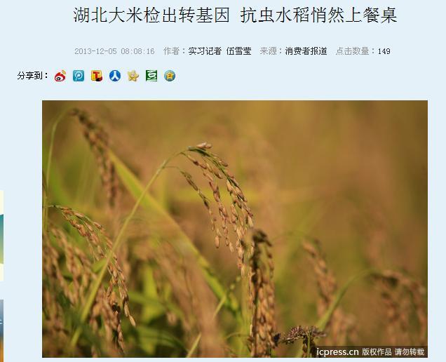 湖北大米检出转基因抗虫水稻悄然上餐桌 - 蒋高明 - 蒋高明的博客