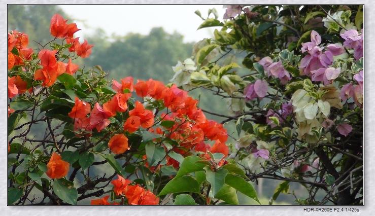 戎色图片_科学网—命题作文之华南植物园(1):那些花儿 - 徐晓的博文