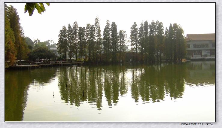 命题作文之华南植物园(2):致青春