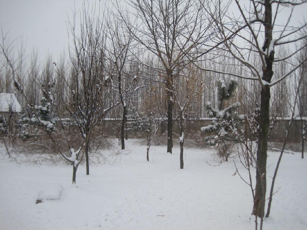 雪后之生态农场 - 蒋高明 - 蒋高明的博客