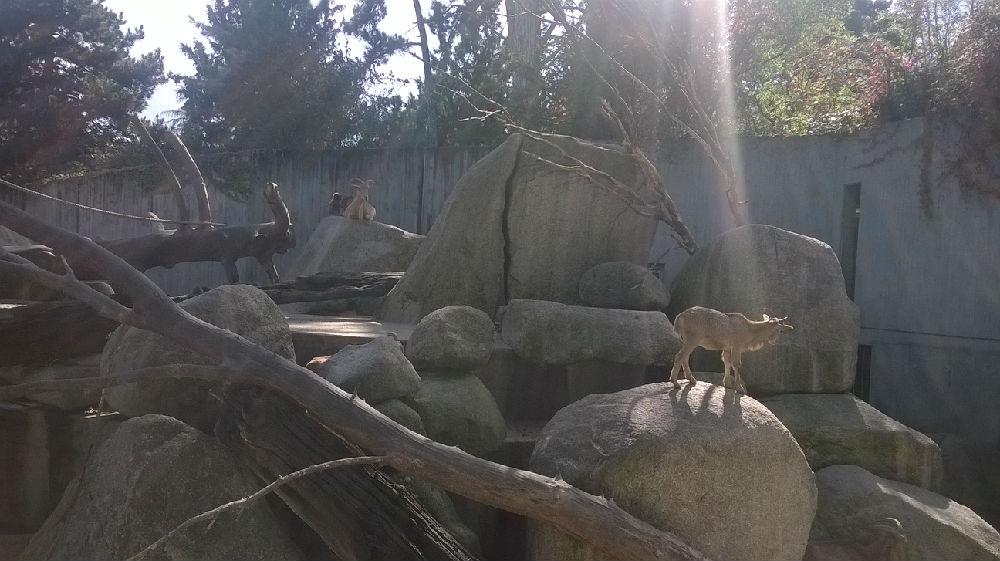 威廉海玛动植物园_科学网—威廉海玛动物园·综合-李杰的博文