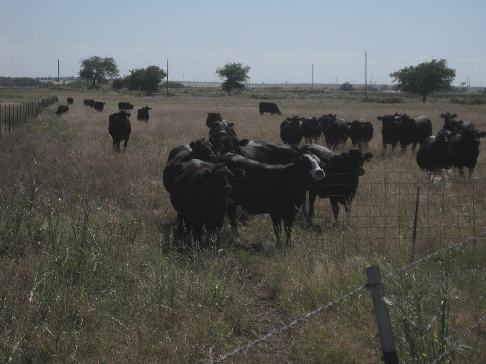 美国畜牧业考察见闻 - 蒋高明 - 蒋高明的博客