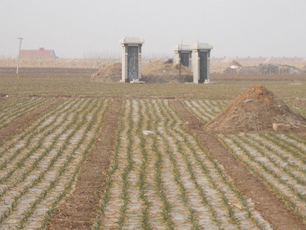 乡村调查之九:尴尬的农村殡葬制度 - 蒋高明 - 蒋高明的博客