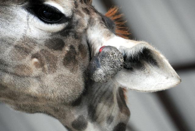 原创 :去看望人类的朋友——动物 - 小小蜡烛 - 小小蜡烛