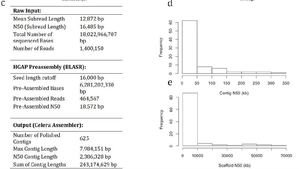 Nature:PacBio完成耐旱植物Oropetium thomaeum基因组测序 - 云之南 - 云之南