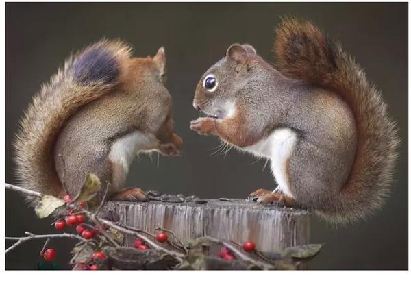 男松鼠追求女松鼠攻略大全图片