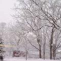 冬天的后院