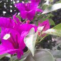 金秋的祭祀--院子里的花儿