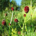 蒙古草原上的花儿