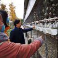 鸽子养殖与疾病问题